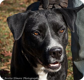 Labrador Retriever Mix Dog for adoption in Daleville, Alabama - Benny