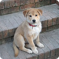 Adopt A Pet :: Biscuit (fostered in SC) - Cranston, RI
