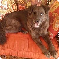Adopt A Pet :: Zoey - Hamilton, ON