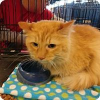 Adopt A Pet :: Diego - Avon, OH