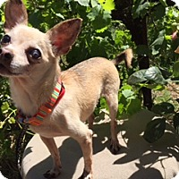 Adopt A Pet :: PIXIE - Elk Grove, CA