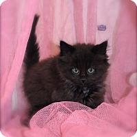 Adopt A Pet :: Eliza - Naperville, IL
