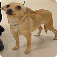 Adopt A Pet :: Peach - Ogden, UT