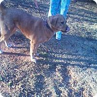 Adopt A Pet :: *Shea - Winder, GA