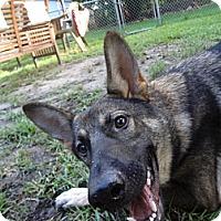 Adopt A Pet :: Audrey - Green Cove Springs, FL