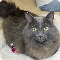 Adopt A Pet :: Char Char - Naples, FL