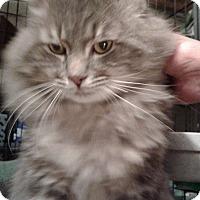 Adopt A Pet :: Brutus - Stafford, VA