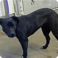 Adopt A Pet :: Belle - Wytheville, VA