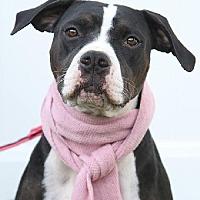 Adopt A Pet :: Piper - Gibbstown, NJ