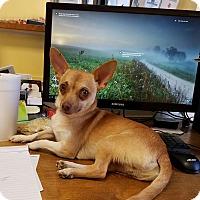 Adopt A Pet :: Nigel - Atchison, KS