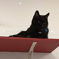 Adopt A Pet :: Sally - Kalamazoo, MI