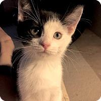 Adopt A Pet :: Phantom - Monroe, GA