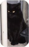 Domestic Shorthair Cat for adoption in El Cajon, California - Casper