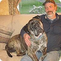 Adopt A Pet :: Jude - Roy, WA
