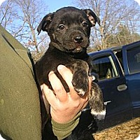 Adopt A Pet :: Louisa - Glastonbury, CT