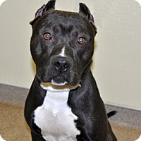 Adopt A Pet :: Zorro - Port Washington, NY
