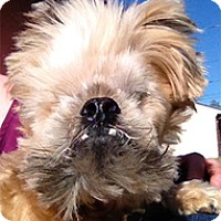 Adopt A Pet :: Chewbacca - Spring City, TN