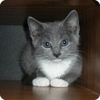 Adopt A Pet :: Misty - Kirkwood, DE