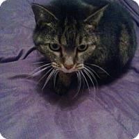 Adopt A Pet :: Little Bit - Troy, OH