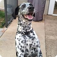 Adopt A Pet :: Pepper - Tampa, FL