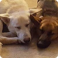 Adopt A Pet :: Kaiser and Kikka - Staunton, VA