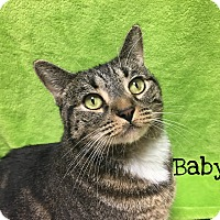 Adopt A Pet :: Baby - Foothill Ranch, CA