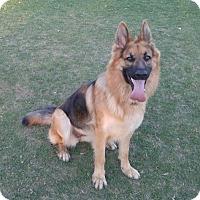 Adopt A Pet :: Roxie - San Diego, CA