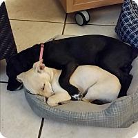 Adopt A Pet :: Elsie - Pinellas Park, FL