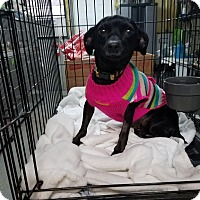 Adopt A Pet :: MINDY - Lubbock, TX