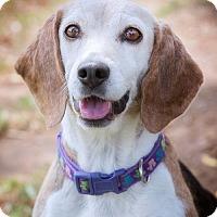 Adopt A Pet :: Roxie - El Cajon, CA
