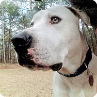 Adopt A Pet :: Barkley 💚 DOB 1/2015! - Saratoga Springs, NY