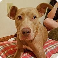 Adopt A Pet :: Roux - Kingston, TN