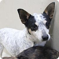 Adopt A Pet :: A28 Fina - Odessa, TX