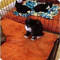 Adopt A Pet :: More - Mobile, AL