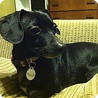 Adopt A Pet :: Mack~Adopted! - Troy, OH