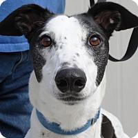 Adopt A Pet :: Madden - Orange County, CA