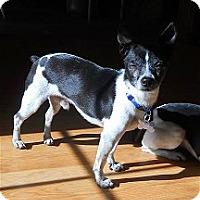 Adopt A Pet :: Mister Big - Oklahoma City, OK