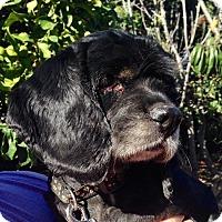 Adopt A Pet :: Coco - Santa Barbara, CA