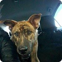 Adopt A Pet :: Atticus - Rexford, NY