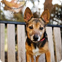 Adopt A Pet :: Zane and Sawyer - Lincoln, NE