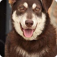 Adopt A Pet :: Precious von Penzer - Los Angeles, CA