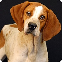 Adopt A Pet :: Jude - Newland, NC
