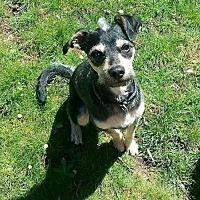Adopt A Pet :: Ace - Custer, WA