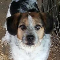 Adopt A Pet :: Lucky Lindy - Baileyton, AL