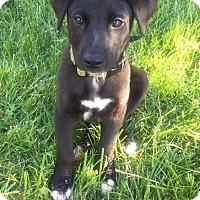 Adopt A Pet :: Dunn - MCLEAN, VA