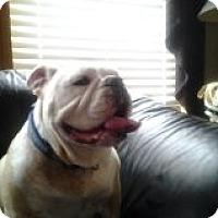 Adopt A Pet :: Jake - Decatur, IL