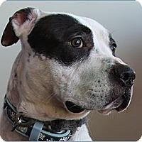 Adopt A Pet :: Rocco - Charlotte, NC