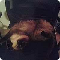 Adopt A Pet :: *Gizmo - Winder, GA