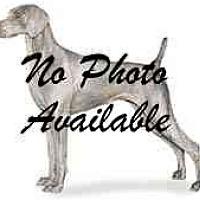 Adopt A Pet :: Gin - Eustis, FL