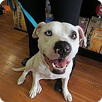 Adopt A Pet :: Zorro - Calgary, AB
